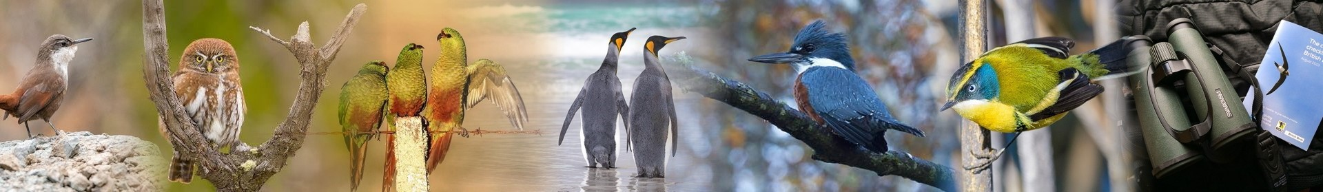Birding, Travel & Leisure