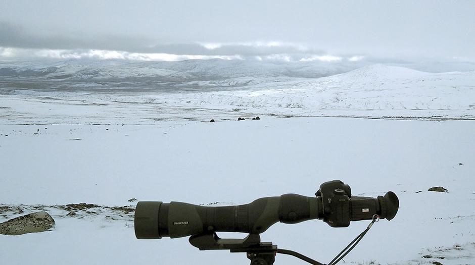 Mi equipo: Canon 5D Mark III, STX 85 y TLS APO 43 mm