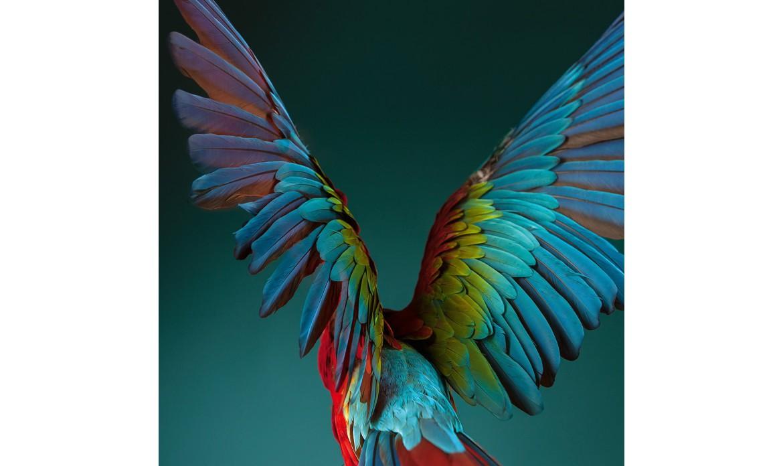 """Swarovski Optik                     """"Tan colorido como la vida misma"""""""